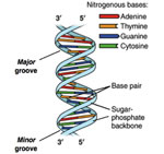 How is DNA Sequenced?