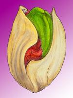 The Not-So-Green Pistachio